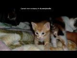 «мои КОТЯТА!..» под музыку Gummy Bear - я мишка Гуми Бер. Picrolla